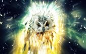 Owl, abstract animal concept