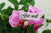 Get well card with pink orchid