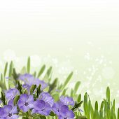 Postcard With Spring  Flowers And Empty  Place For Your Text