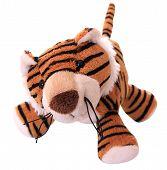 New-year tiger cub.