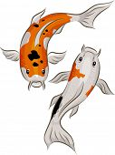 Illustration of a Pair of Colorful Koi Fish Swimming About