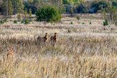 Horses In Chernobyl Zone