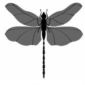 Dragon Fly Shillouette Over a White Background
