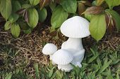 Mushroom Sculpture In Garden