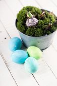 Easter Eggs, Moss, Bulbs.