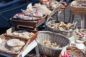 pic of sanddollar  - Starfish and seashells souvenirs for sale at street - JPG