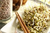 picture of mung beans  - Lentil and mung beans sprouts salad on plate with chopsticks - JPG