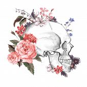 picture of day dead skull  - Roses and Skull - JPG