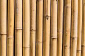 foto of bamboo forest  - bamboo fence background asian forest tree natural - JPG