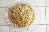pic of bean sprouts  - Stir fried bean sprout on the plate ready to be eaten - JPG