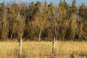 picture of barbed wire fence  - Forest behind a barbed old wire fence - JPG