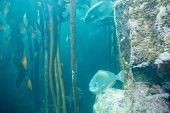 stock photo of algae  - Fish swimming in a tank with algae and stones at the aquarium - JPG