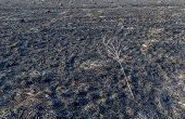 image of prairie  - The charred remains following a prairie fire in Wisconsin - JPG
