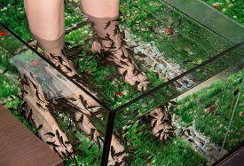 image of fish  - Fish spa feet pedicure skin care treatment with the fish rufa garra - JPG
