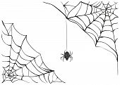 Постер, плакат: Spiderweb Big black spider web Black scary spider of web Poison spider