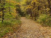 Leaves_Alley