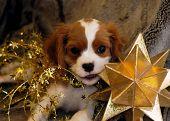 Puppy_Star