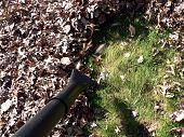 Fall Yard Work - Leaf Blower 3