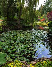 picture of garden eden  - In pond - JPG