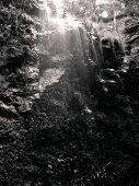Imagen blanco y negro del Parque Nacional de Springbrook, Queensland
