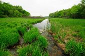 Zonas húmidas verdes na Primavera