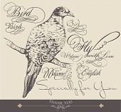 hand-drawn bird with elegance calligraphy design 2