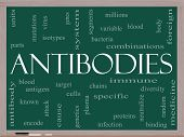 Antibodies Word Cloud Concept On A Blackboard