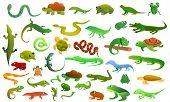 Reptiles Amphibians Icons Set. Cartoon Set Of Reptiles Amphibians Vector Icons For Web Design poster