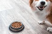 Portrait Of A Dog With A Bowl Of Dry Food. Dog Food Concept poster