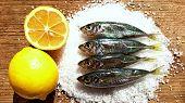 Fresh Mackerel Fish Background Display Market. Sea Little Fish Mackerel Saurels Or Sardine Trachurus poster