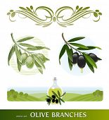 stock photo of olive branch  - Vector set  - JPG