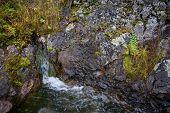 Natural source of mineral curative water. Wild taiga region of Primorsky Krai (Primorsk Territory). Russia.
