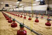 pic of hatcher  - The modern and new automated integrated poultry farm - JPG