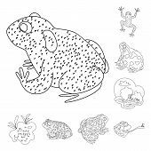 Vector Design Of Amphibian And Animal Icon. Set Of Amphibian And Nature Vector Icon For Stock. poster