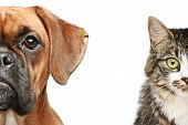 Dog And Cat. Half Of Muzzle Close Up Portrait poster