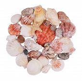 Handful Of Seashells And Starfish