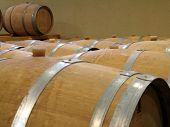 Oak Barrels In A Wine Cellar
