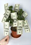 Tree Of Money