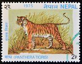 NEPAL - CIRCA 1975: Un sello impreso en Nepal muestra image de un tigre Panthera Tigris alrededor de 1975.