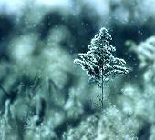 Cool Mint Tree