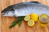 Salmon fish close up