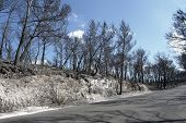 Roadside Scenery After A Forest Fire