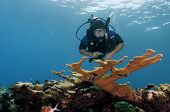 Man scuba diving on coloful coral reef in the Caribbean