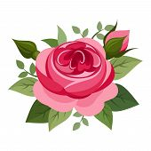 stock photo of english rose  - Vector illustration of red English rose isolated on a white background - JPG