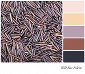 A background of Canadian wild rice in a colour palette with complimentary colour swatches
