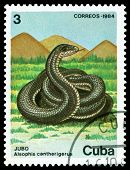 Vintage  Postage Stamp. Alsophis Cantherigerus.