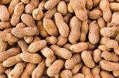 picture of groundnut  - Close up of some peanuts or groundnut background - JPG