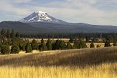 Golden Grassland Countryside Mount Adams Mountain Farmland Landscape