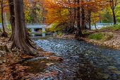 stock photo of opulence  - Large Cypress Trees with Stunning Fall Color Lining a Crystal Clear Texas Hill Country Stream with Bridge - JPG