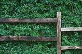 The green of nature wall